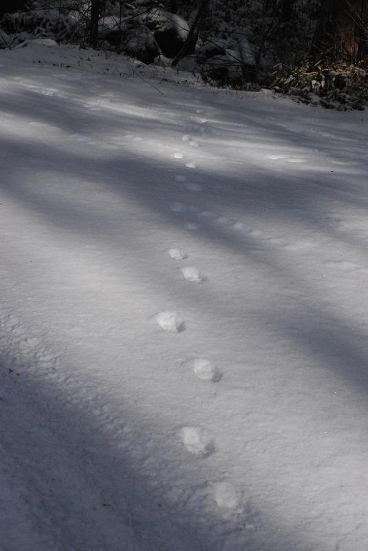 雪の上に動物の足跡