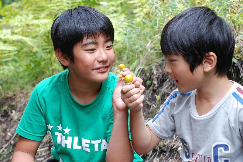 子どもも大好きフルーツほおずき